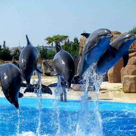 عرض الدولفين في شرم الشيخ